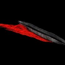 Traversée rouge 2016 50cm